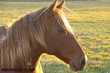 Champú para caballos y ahora para hombres